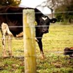 A tejipar árnyoldala – megdöbbentő rejtett kamerás felvételeket készítettek az állatvédők