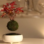 Lebegő bonsai fa – a legkülönlegesebb szobanövény