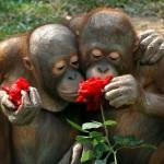 Aranyos fotóválogatás virágokat szimatoló állatokról
