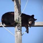 Vicces fotóválogatás a legfurcsább helyeken és pózokban elalvó állatokról
