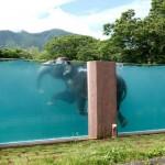 Üvegfalú medencében úszkálnak az elefántok egy japán állatkertben