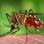 Végigsöpörhet a Zika-vírus az amerikai kontinensen