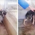 Szívszorító módon reagált az első simogatásokra a bántalmazott kutya