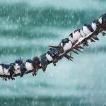 Aranyos fotósorozat egymáshoz bújó madarakról