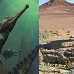 A valaha élt legnagyobb krokodil koponyáját találták meg Tunéziában