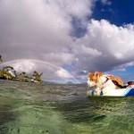Imád úszni és szörfözni a menhelyről befogadott egyszemű cica