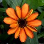 Kinyílt az első virág a világűrben