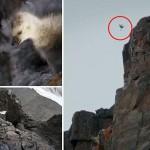 Hihetetlen videó – apácalúd fiókák 120 méteres zuhanása a sziklapárkányról