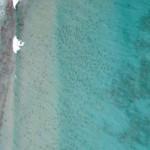 Több ezer cápa gyűlt össze Florida partjainál – elképesztő légi felvételek