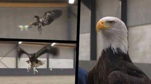 Drónokra vadászó sasokat képeznek ki a rendőrök
