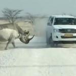 Egy turistákkal teli terepjáróra támadt rá egy dühös orrszarvú