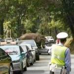 Sorozatosan parkoló autókat rongál meg egy elefánt Kínában