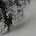 Különleges találkozás – hópárducot látott egy Indiában síelő csoport