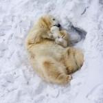 Aranyos fotóválogatás a Nemzetközi Jegesmedve Nap alkalmából
