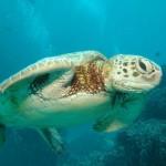 Az ausztráliai Nagy-korallzátony lehet a globális korallfehéredés következő áldozata