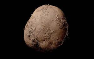 Egymillió dollárért kelt el egy krumpliról készült fotó
