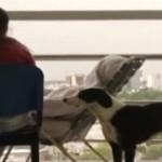 Elhunyt gazdája után kutatva járja a kórházi folyosókat egy hűséges kutya