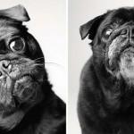 Kutyaportrék akkor és most – megható fotósorozat az ember legjobb barátjáról