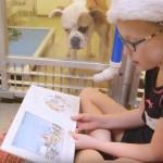 Gyerekek olvasnak fel a gazdára váró, félős kutyáknak egy menhelyen