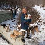 Kétszáz kutyát mentett meg a biztos haláltól egy idős dél-koreai nő