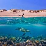 Photo: Gyönyörű fotók, melyeken egyszerre látható a víz feletti és víz alatti világ