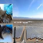 Évente 3500 madarat öl meg a világ egyik legnagyobb naperőműve