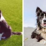 Hét év után került elő egy ausztrál család kutyája