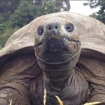 Először fürdették meg a világ legöregebb teknősét, a 184 éves Jonathant