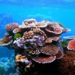 A legmagasabb szintre emelték a korallfehéredés miatti riasztást a Nagy-korallzátonynál