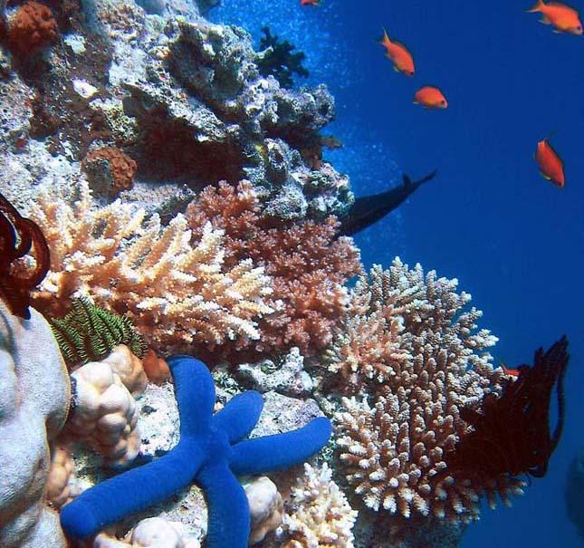 korallzatony-5