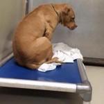Depressziós lett a menhelyre visszavitt kutya