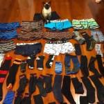 Zoknit és alsónadrágot lop a szomszédoktól egy új-zélandi macska