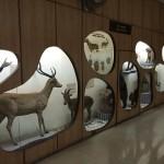 Photo: Megsemmisült a delhi Természettudományi Múzeum teljes gyűjteménye egy tűzvészben