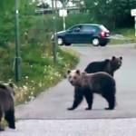 Szükségállapotot rendeltek el a medvék miatt a Magas-Tátrában