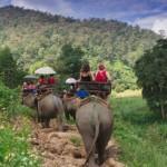 Csökkentik az elefántok munkaidejét Kambodzsában, miután egy állat elpusztult hőgutában