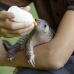 Csodával határos módon sikerült megmenteniük az állatvédőknek az elárvult tobzoskát