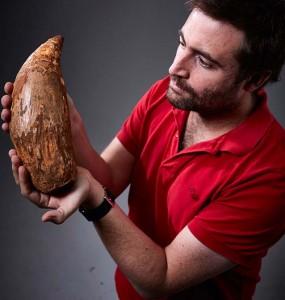 Egy óriás ámbráscet ötmillió éves fogára bukkantak egy ausztrál strandon