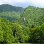 A magyarországi védett erdők felén ma is fakitermelés folyik