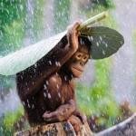 Leleményes állatok, akik a természetből kölcsönöztek esernyőt maguknak