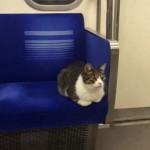 Egyedül utazik a tokiói metrón egy barátságos cica