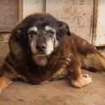 Meghalt a világ legöregebb kutyája