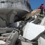 Meghalt a hős mentőkutya, aki az ecuadori földrengés túlélői után kutatott