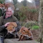 Nem mozdulnak szeretett megmentőjük mellől a rókák
