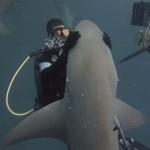 Különleges barátság – minden alkalommal simogatást kér a cápa a búvártól