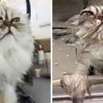 Állatok fürdetés előtt és után – aranyos fotóválogatás