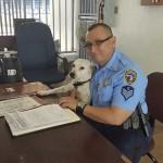 Rendőrök fogadták be az utcán kóborló, bántalmazott kutyát