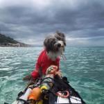 Egy kutya lett az útitársa a férfinek, aki három éve kajakozik a Földközi-tengeren