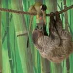 Lopás áldozatául esett a Nyíregyházi Állatpark egyik lajhárja