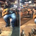 Photo: Elbűvölten hallgatták a kíváncsi cicák a zenész játékát