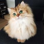 Photo: Smoothie - a világ legfotogénebb cicája